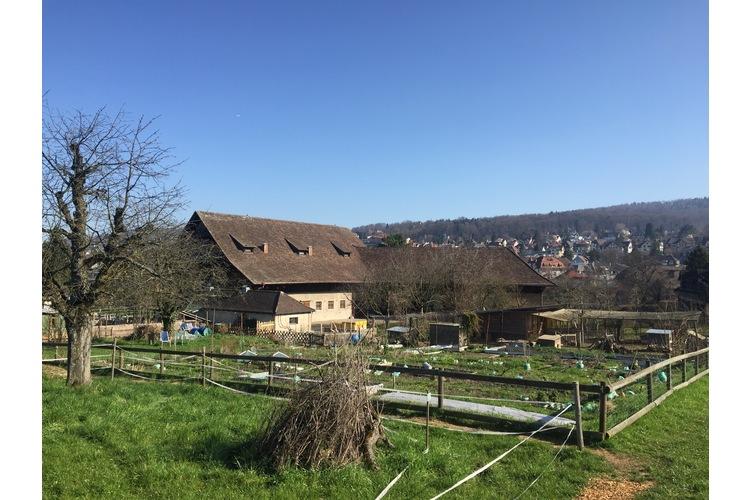 6/6 Volltreffer für Familien mitten in Zürich: Der Quartierhof Wynegg