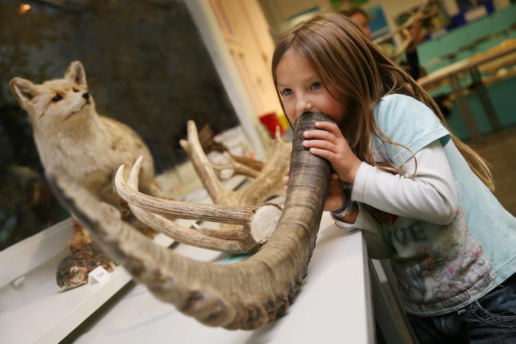 5 / 6 Das Naturhistorische Museum in Bern zeigt Grosskatzen und Huftiere Afrikas, asiatische Säugetiere, Hirsche und Bären.