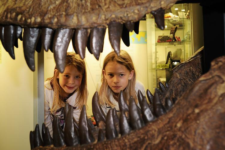 1 / 6 Im Sauriermuseum: Wow! So grosse Zähne! Die Faszination der Saurier ist ungebrochen, vor allem bei Kindern und Jugendlichen.