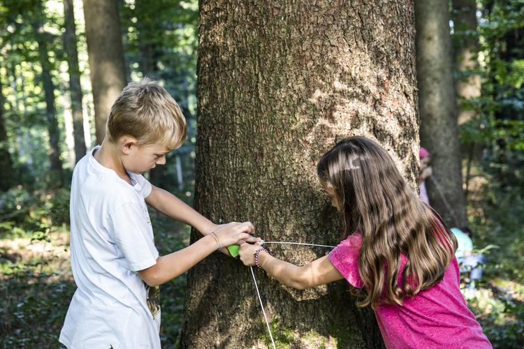 1/4 Wie dick ist der Baumstamm? Mathe geht auch im Wald.