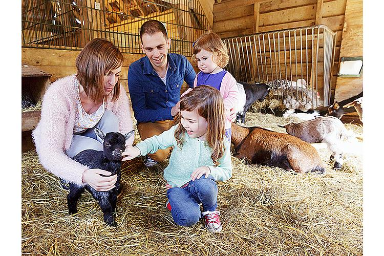 Ziegen streicheln auf dem Kinderbauernhof