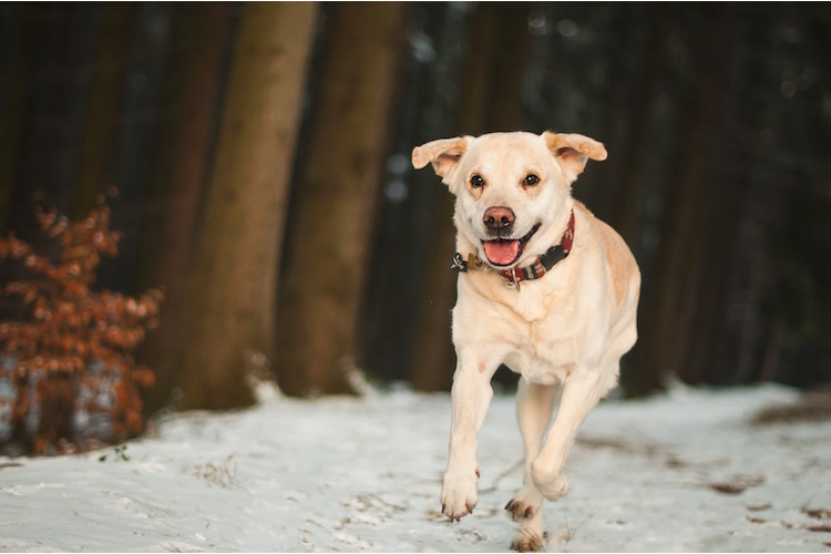 5/6Idealer Familienhund zum 2:Auch der Labrador ...