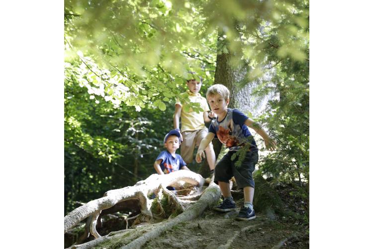 «Im Wald spielen ist die beste frühkindliche Bildung», sagt die Erziehungswissenschaftlerin Margrit Stamm. Dabei dürfe sich das Kind auch mal eine Schramme holen. Es lerne so, sich in risikoreichen Situationen zu bewähren.